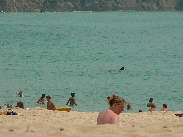 For some reason this movie makes me think of sharks on a beach. (Candiche, Flickr, CC license.)